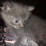 Котята в добрые руки. Фото 2. Подольск.