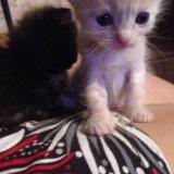 Котята в добрые руки. Фото 1. Подольск.
