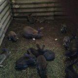 Мясо:гуси.ути.индейка.кролик.нутрия. Фото 4.