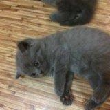 Котята. Фото 2. Красноярск.