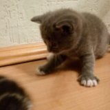 Котенок. Фото 4.