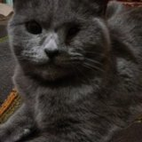 Кошка. Фото 1. Ставрополь.