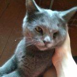 Кошка. Фото 4.