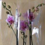 Орхидея. Фото 1.