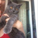 Вязка с котом. Фото 1. Хабаровск.