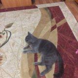 Вязка с котом. Фото 3. Хабаровск.