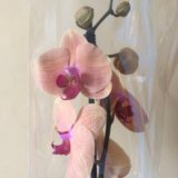 Орхидеи. Фото 4.