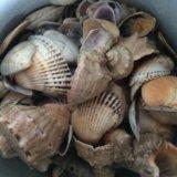 Ракушки для аквариума. Фото 1.
