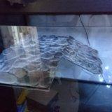 Террариум. Фото 2.