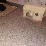 Домик для грызуна(новый). Фото 2.