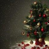 Живые новогодние елки, пихты, сосны. Фото 1.