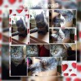 Внимание!!!!! продам котят!!!!. Фото 4.