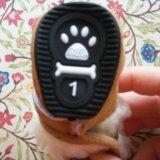 Ботинки для собачки. Фото 4.