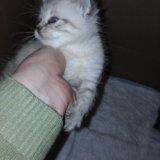 Котята. Фото 1. Орел.