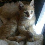Котик степа ищет семью. Фото 3. Астрахань.