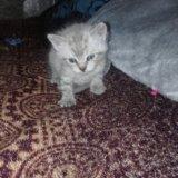 Котята. Фото 4. Орел.