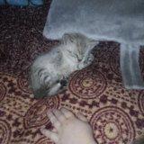 Котята. Фото 3. Орел.