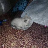 Котята. Фото 2. Орел.