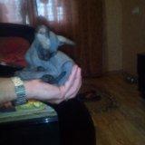 Кошечка сфинкс. Фото 1.
