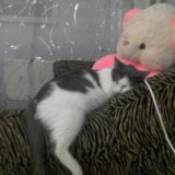 Отдам ласковую кошку. Фото 3.