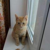 Отдадим котенка в добрые руки!. Фото 3.