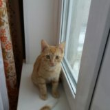 Отдадим котенка в добрые руки!. Фото 4.