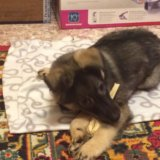 Отдам щенка в очень добрые и надежные ручки!!. Фото 3.