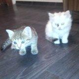 Котята. Фото 2. Барнаул.