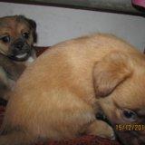 Милые щенятки. Фото 3.