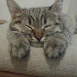 Котята домашние. Фото 1. Батайск.