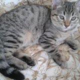 Котята домашние. Фото 2. Батайск.