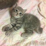 Котёнок 🐱. Фото 2.