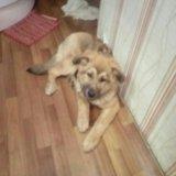 Собака. Фото 2. Рыбинск.