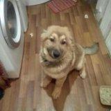 Собака. Фото 4. Рыбинск.
