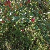 Участок, до 6 сот., сельхоз (снт или днп). Фото 2.