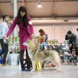 Сибирский хаски щенок. Фото 2. Пушкино.