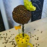 Кофейное дерево. Фото 1.