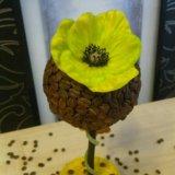Кофейное дерево. Фото 2.
