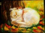Солнечный кот. Фото 1.