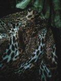 Женский полушубок. Фото 4.