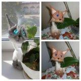 Котики нежные. Фото 2.