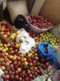 Яблоки. Фото 1.