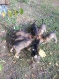 Красивые щенки!. Фото 3.