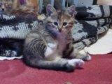 Срочно ,котята ищут дом. Фото 1.