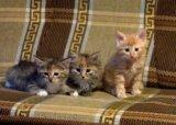 Срочно ,котята ищут дом. Фото 3.
