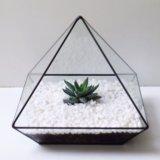 Флорариум пирамидка с хавортией. Фото 3.