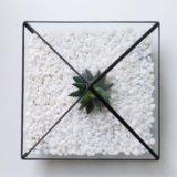 Флорариум пирамидка с хавортией. Фото 4.
