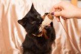 Котик миша ищет дом. Фото 3.