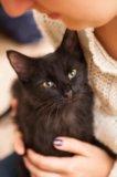 Котик миша ищет дом. Фото 4.