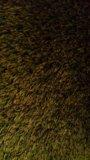 Искуственный газон. Фото 2.